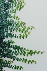 the 25 best vines ideas on pinterest climbing flowering vines