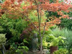 trees for small spaces small garden trees hgtv