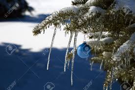 Ice Blue Christmas Tree Decorations by Pine Tree Covered In Snow And Icicles With Blue Christmas