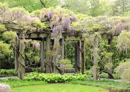 Pictures Of Pergolas In Gardens by Longwood Gardens Wisteria Pergola Wisteria Vine Has To Be One Of
