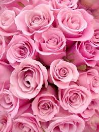 pink and roses which type of are you jealousy and femininity