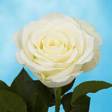 100 Flower Shops In Santa Flower Bouquets Garden Plants U0026 Flowers The Home Depot