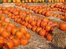 preschool pumpkin activities theme