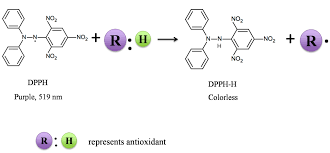 molecules free full text antioxidant property of coffee