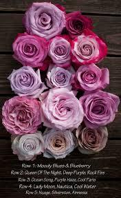 25 beautiful purple roses ideas on pinterest purple rose