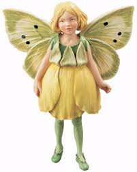 buttercup flower fairies flower fairies garden