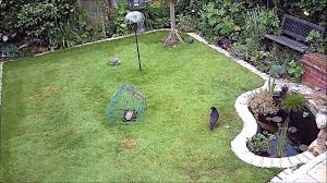 squirrel gets baffled by baffle but finds way into bird ground