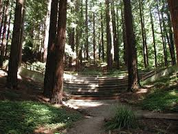 redwood forest wedding venue 11 redwood groves where you can find peace and sfgate
