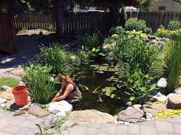 pond maintenance services eastern long island north south fork