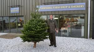 christmas trees a long term growth business bbc news