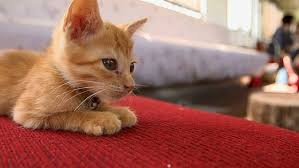 Cats In Small Spaces Video - listen up right meow a cat festival is coming to london metro news