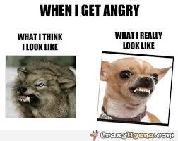 Dog Teeth Meme - dogs showing teeth