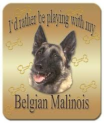 belgian malinois quotes 83 best belgian malinois love images on pinterest german