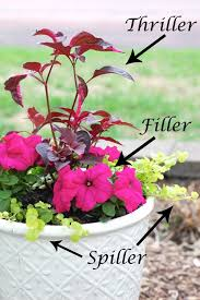 Flower Boxes That Thrive In by How To Arrange Pots According To Thriller Spiller Filler Technique