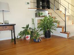 Best Small Bedroom Plants Great Plants For The Living Room Plants In Your Living Room Is One
