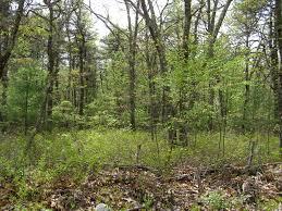 Rhode Island forest images P5020184_small jpg jpg