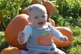 closest halloween city best pumpkin patches and farms near seattle