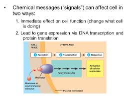 signal transmission u0026 gene expression aka u2013 cell signaling basics