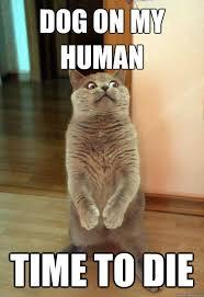 Dog And Cat Memes - dog on my human cat meme cat planet cat planet