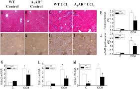 D Collagen a contradictory of a1 adenosine receptor in carbon
