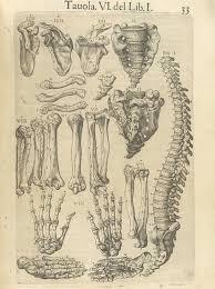 Anatomy Of Human Body Bones Page 33 Of Juan Valverde De Amusco U0027s Anatomia Del Corpo Humano
