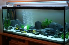aquarium design group freshwater aquarium in a modern interior