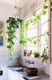 best 25 plant decor ideas on pinterest house plants best 25 kitchen plants ideas on pinterest open shelving kitchen