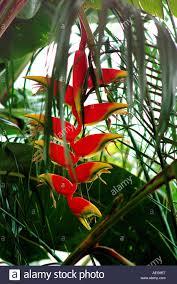 sweet home garden yard plant beautiful hanging stock