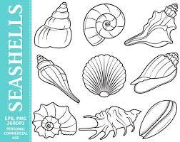 where to buy seashells digital seashells clip sea seashell sea
