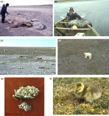 coasts of foxe basin arctic canada geological society london