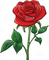 imagenes de amor con rosas animadas rosas rojas de estilo de dibujos animados arte vectorial de stock