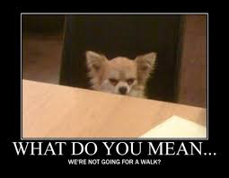 Lawyer Dog Meme - suspicious chihuahua memes image memes at relatably com
