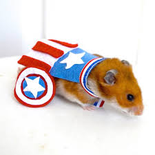 halloween costumes captain america halloween dog costume ideas 32 easy cute costumes for your
