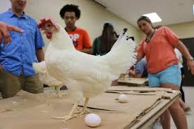 Career Uga Edu Poultry Science