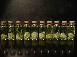 10 tiny terrarium jars dried plants moss miniature display bottles