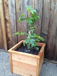 tree planter box stained in black my work pinterest tree