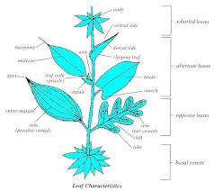 Identify Flowers - wildflower identification