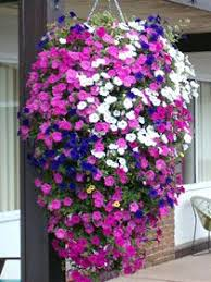 Best Plants For Hanging Baskets by 84 Best Hanging Basket How To Images On Pinterest Hanging