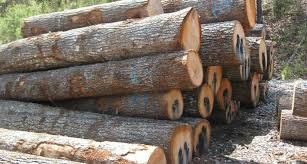 wood log teak wood logs burma teak wood logs burma suppliers and