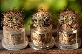 shining knight live cactus plant necklace cactus terrarium gift
