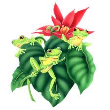 funny frogs cartoon animal u0027s homepage
