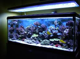 tropical freshwater aquarium fish compatibility aquarium design