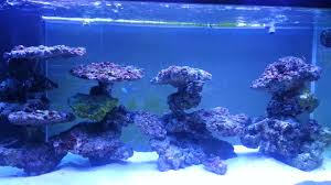Tank Aquascape Reef Tank Aquascaping On Pvc Youtube
