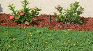 sunset specialty groundcoverperennial peanut sunset specialty