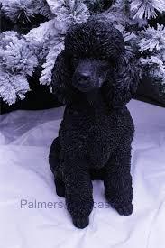 black poodle outdoor statue photo