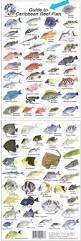 saltwater fish guide anglers forum view topic fish