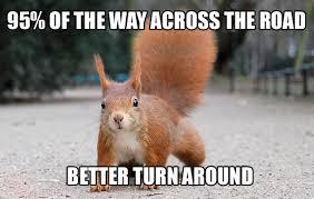 Squirrel Meme - squirrel meme by trackaholics memedroid