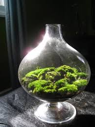 download moss terrariums solidaria garden