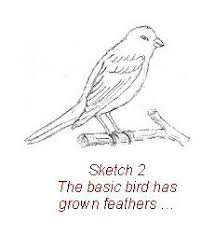 how to draw abird step by step drawing and painting