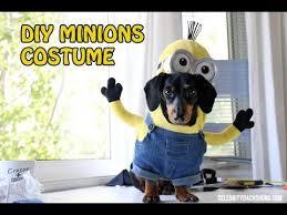 Small Dog Halloween Costumes Ideas Watch Weiner Minions U0027ll Steal Heart
